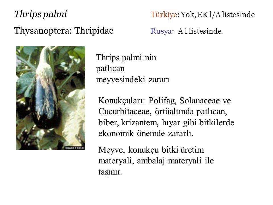 Thrips palmi Türkiye: Yok, EK l/A listesinde