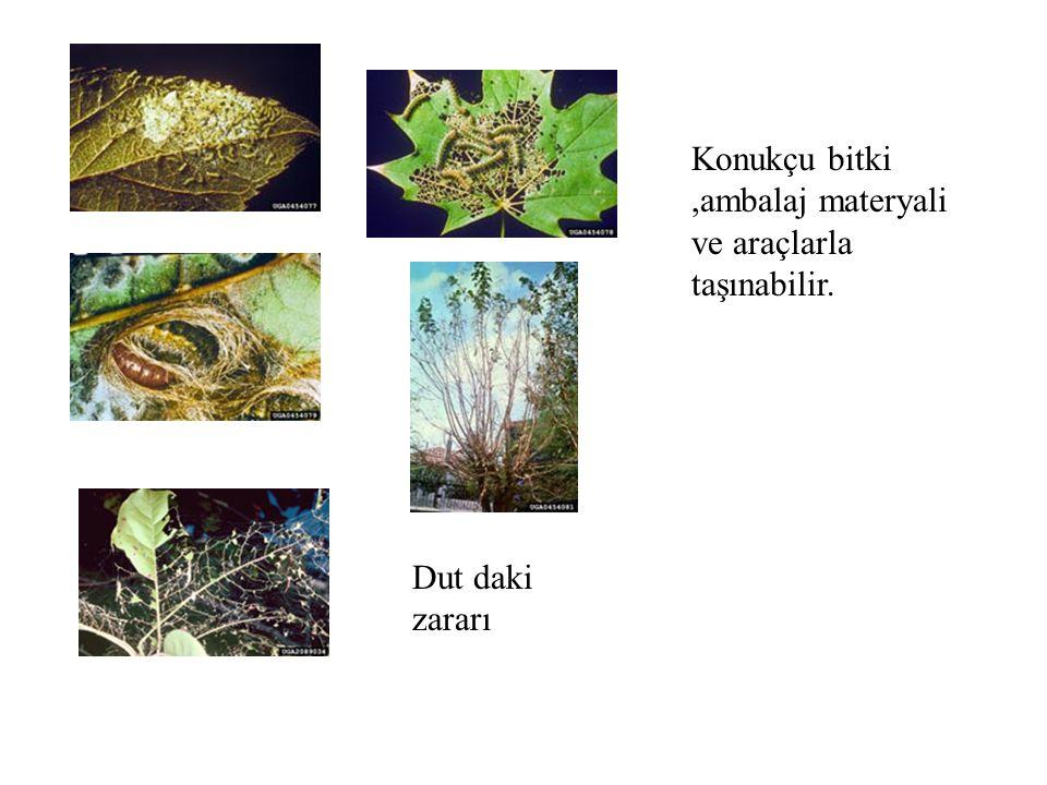 Konukçu bitki ,ambalaj materyali ve araçlarla taşınabilir.