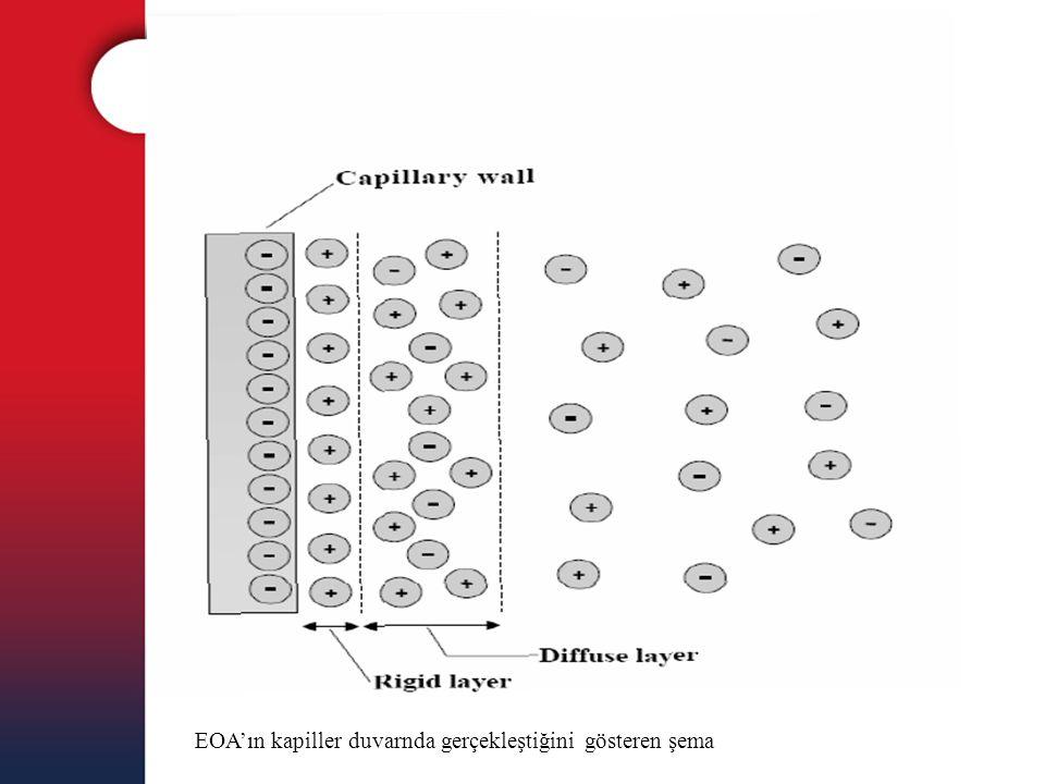 EOA'ın kapiller duvarnda gerçekleştiğini gösteren şema
