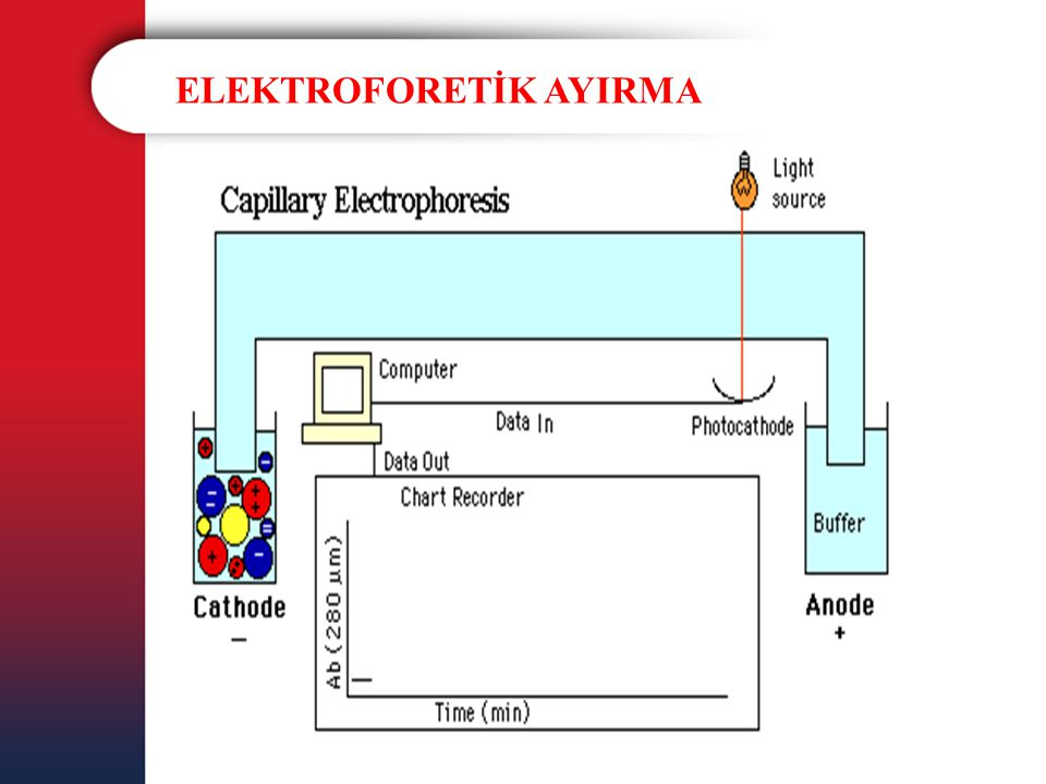 ELEKTROFORETİK AYIRMA