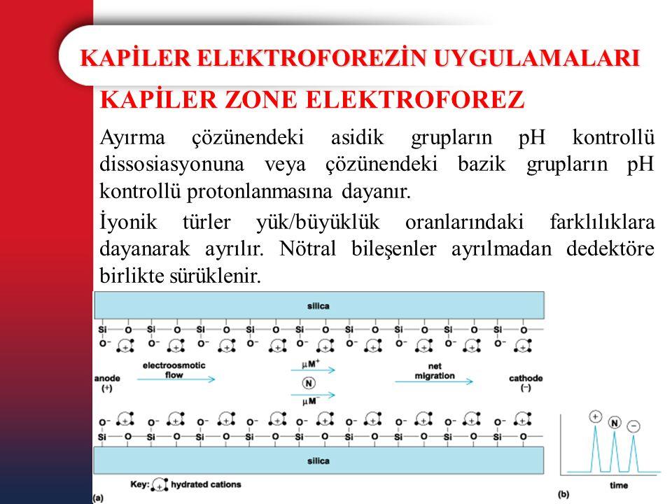 KAPİLER ELEKTROFOREZİN UYGULAMALARI