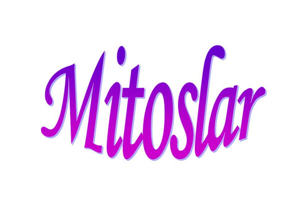 Mitoslar