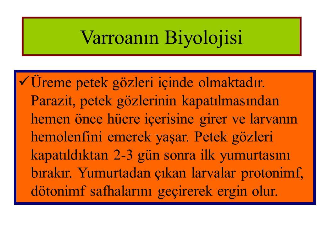 Varroanın Biyolojisi