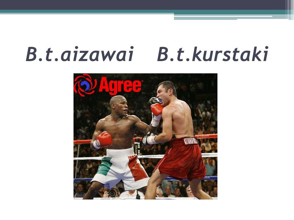 B.t.aizawai B.t.kurstaki