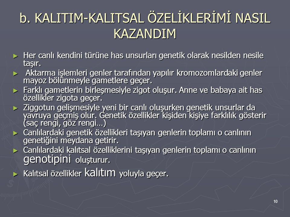 b. KALITIM-KALITSAL ÖZELİKLERİMİ NASIL KAZANDIM