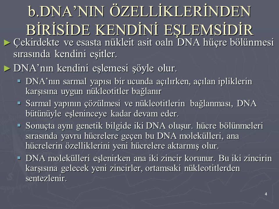 b.DNA'NIN ÖZELLİKLERİNDEN BİRİSİDE KENDİNİ EŞLEMSİDİR