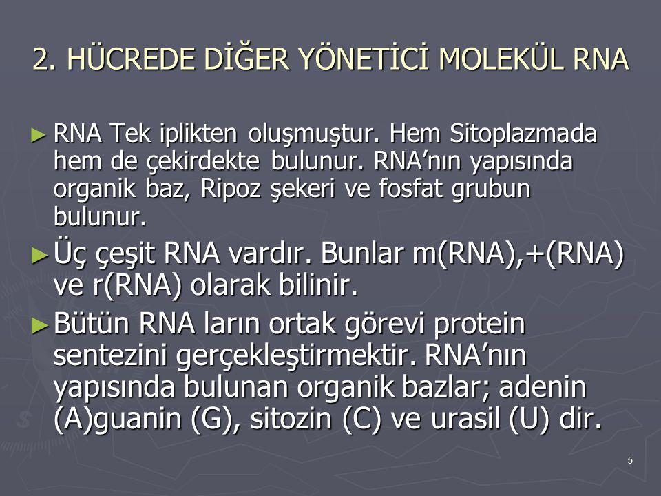 2. HÜCREDE DİĞER YÖNETİCİ MOLEKÜL RNA
