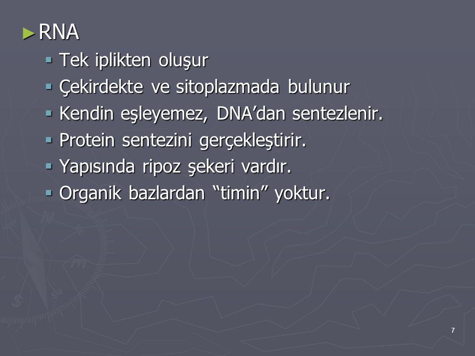 RNA Tek iplikten oluşur Çekirdekte ve sitoplazmada bulunur