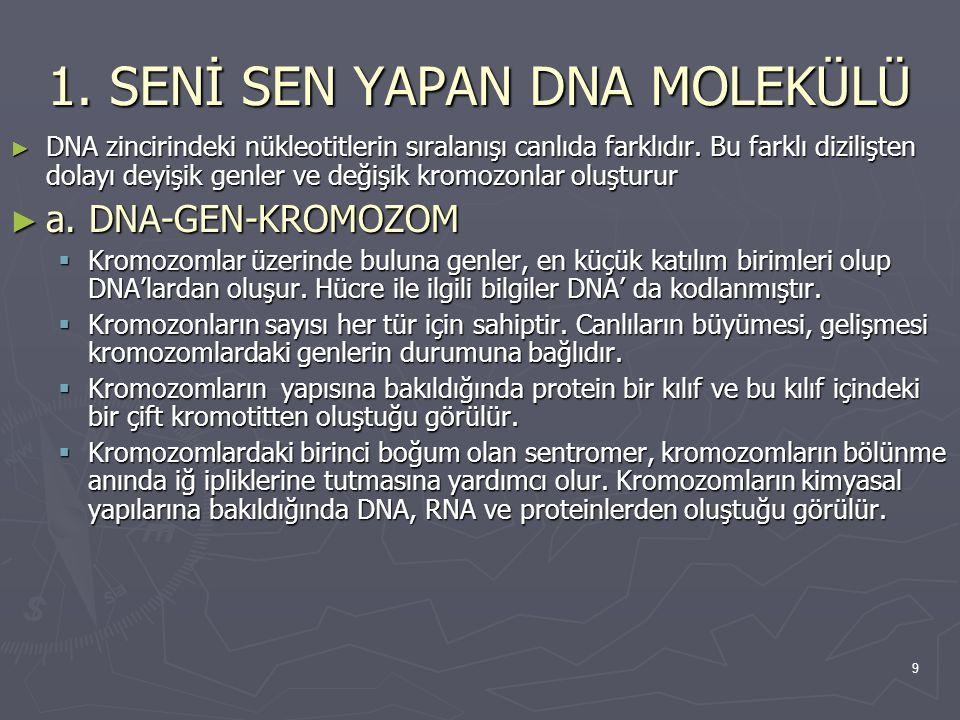 1. SENİ SEN YAPAN DNA MOLEKÜLÜ