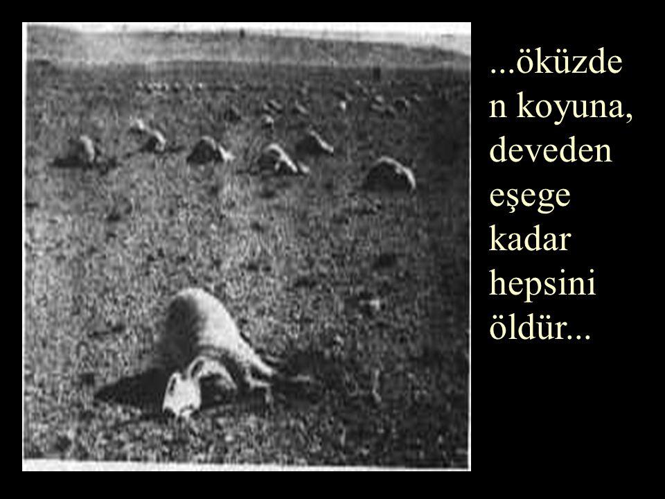 ...öküzden koyuna, deveden eşege kadar hepsini öldür...