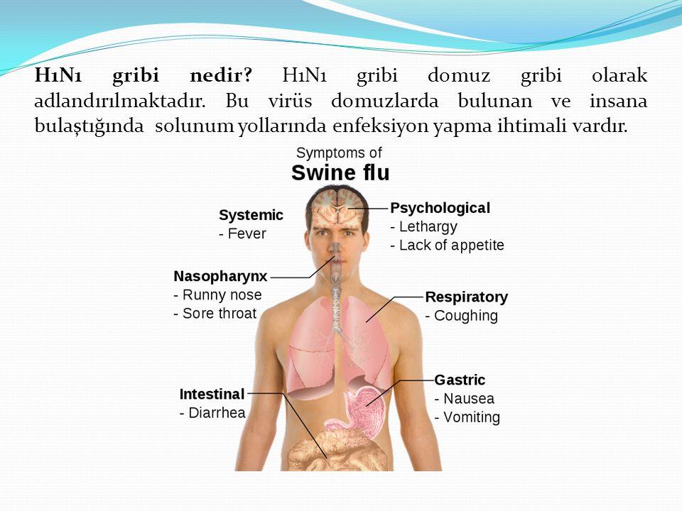 H1N1 gribi nedir. H1N1 gribi domuz gribi olarak adlandırılmaktadır