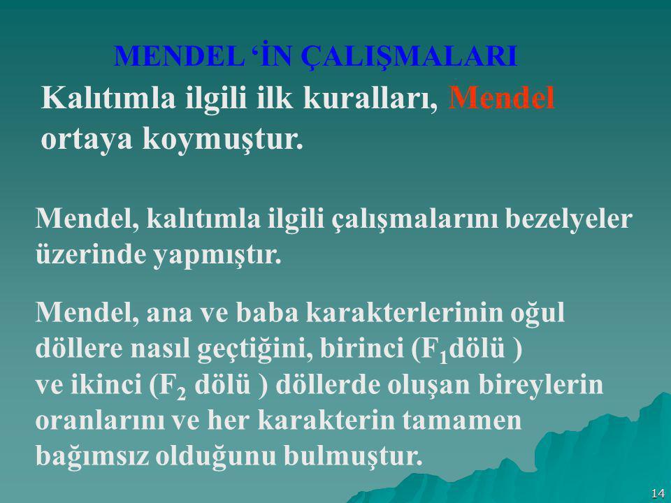 Kalıtımla ilgili ilk kuralları, Mendel ortaya koymuştur.