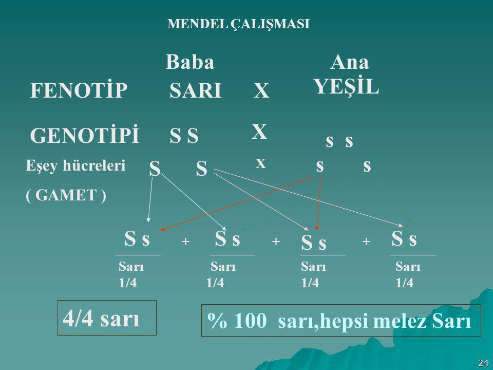 4/4 sarı Baba FENOTİP SARI YEŞİL GENOTİPİ S S s s S S s