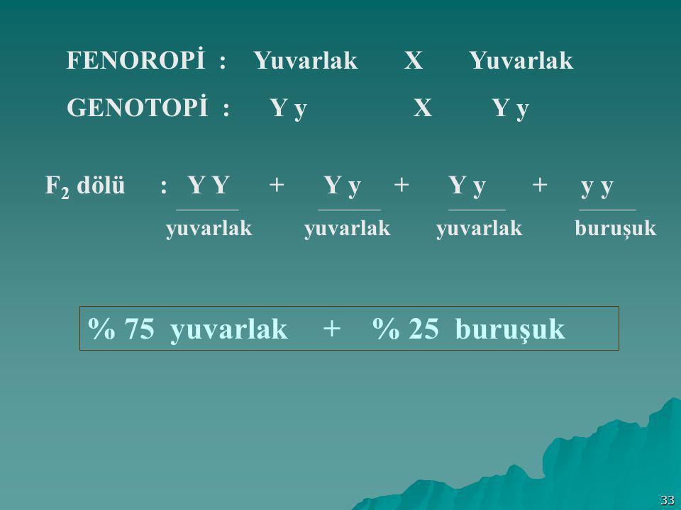 % 75 yuvarlak + % 25 buruşuk GENOTOPİ : Y y X Y y