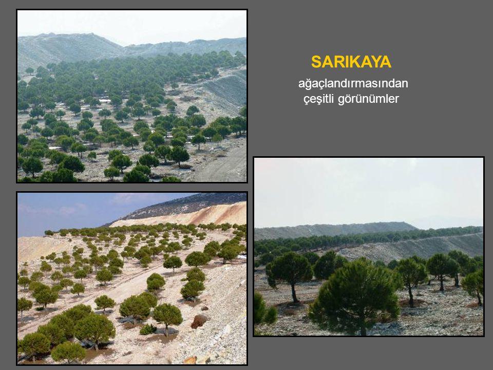SARIKAYA ağaçlandırmasından çeşitli görünümler