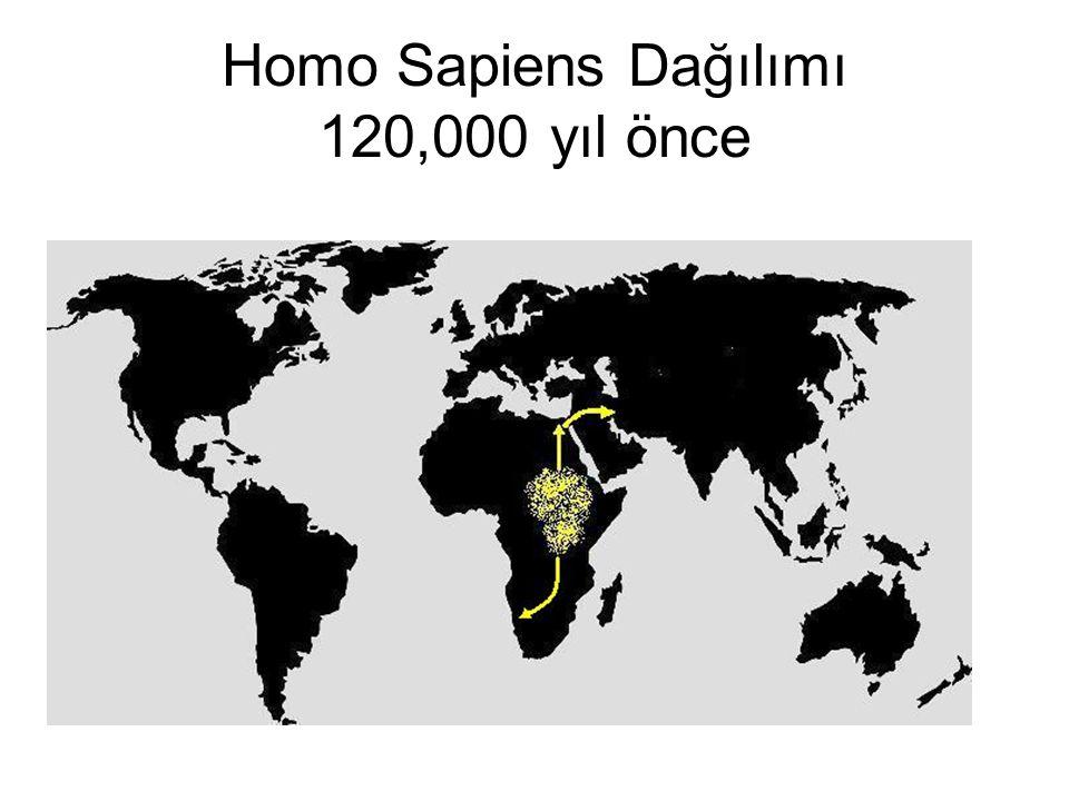 Homo Sapiens Dağılımı 120,000 yıl önce