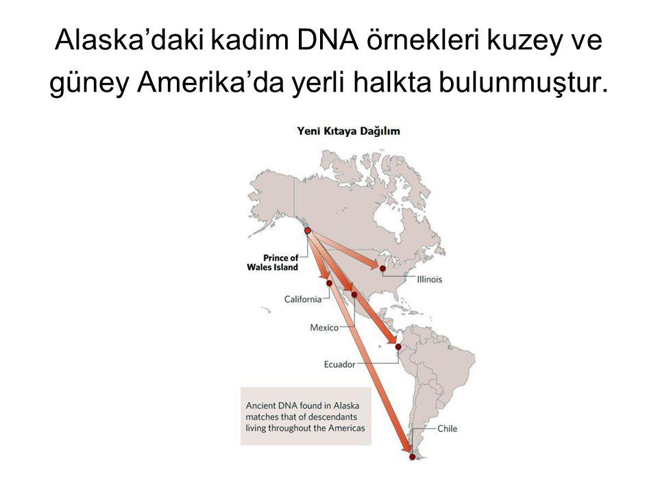 Alaska'daki kadim DNA örnekleri kuzey ve güney Amerika'da yerli halkta bulunmuştur.