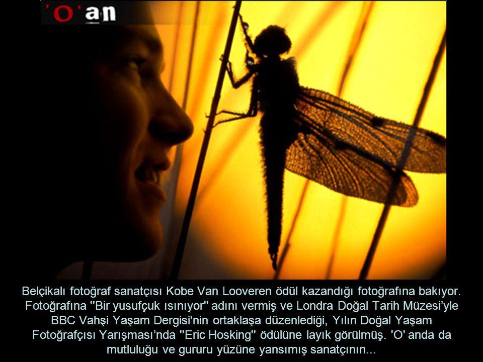 Belçikalı fotoğraf sanatçısı Kobe Van Looveren ödül kazandığı fotoğrafına bakıyor.