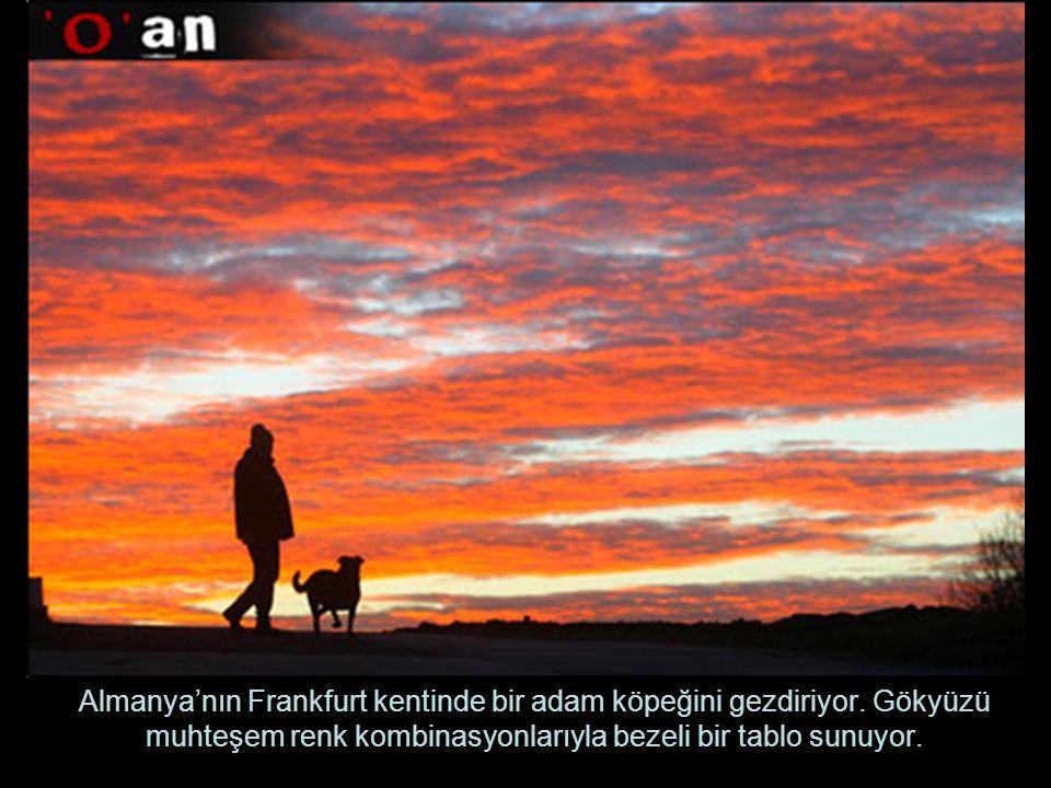 Almanya'nın Frankfurt kentinde bir adam köpeğini gezdiriyor