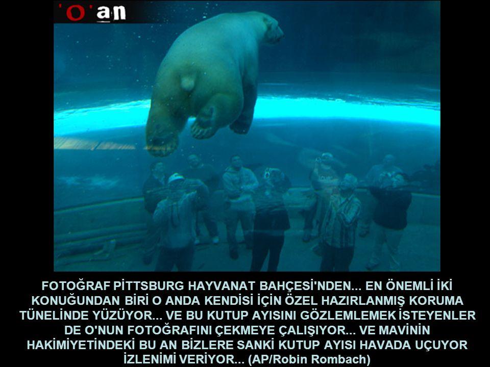 FOTOĞRAF PİTTSBURG HAYVANAT BAHÇESİ NDEN