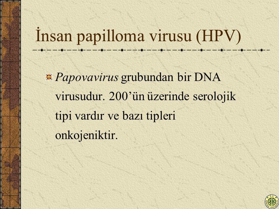İnsan papilloma virusu (HPV)