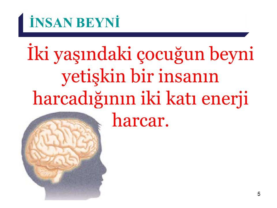 İNSAN BEYNİ İki yaşındaki çocuğun beyni yetişkin bir insanın harcadığının iki katı enerji harcar.