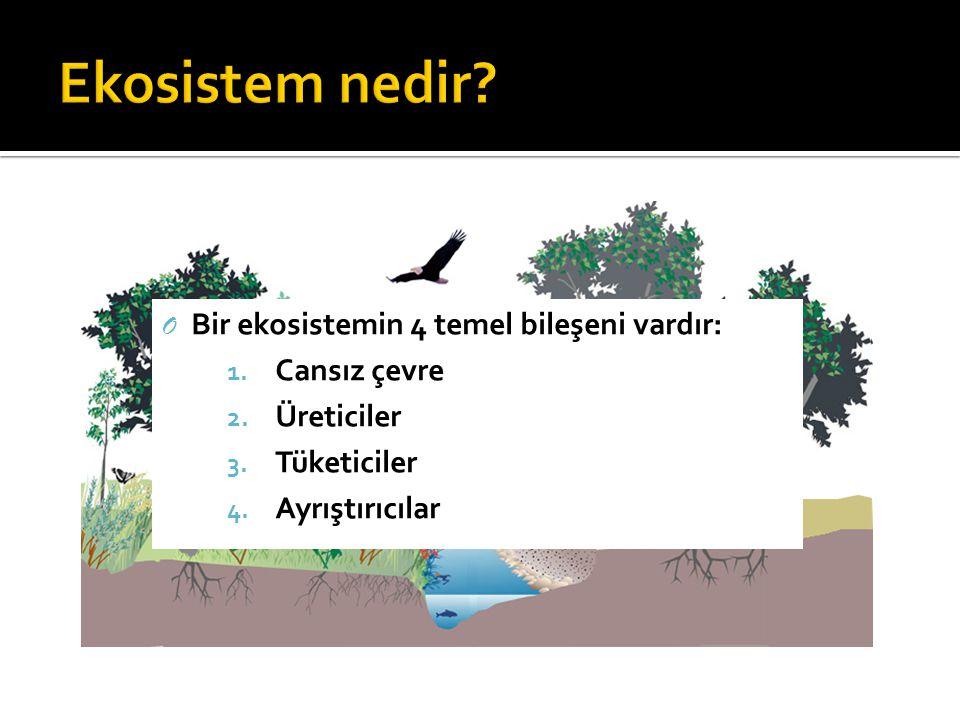 Ekosistem nedir Bir ekosistemin 4 temel bileşeni vardır: Cansız çevre