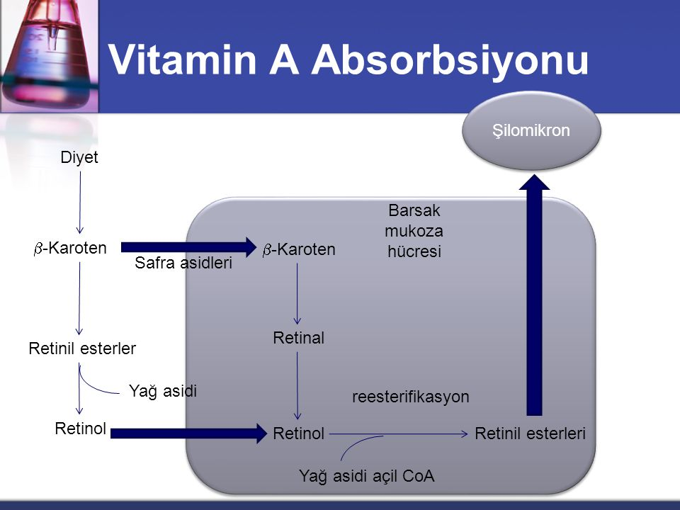 Vitamin A Absorbsiyonu