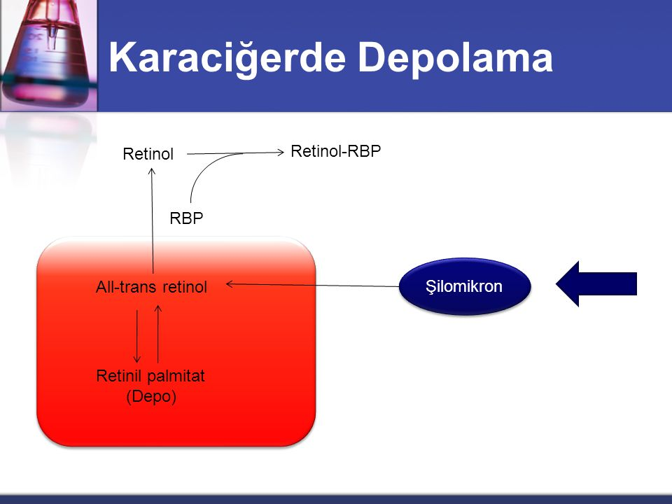 Karaciğerde Depolama Retinol-RBP Retinol RBP Şilomikron