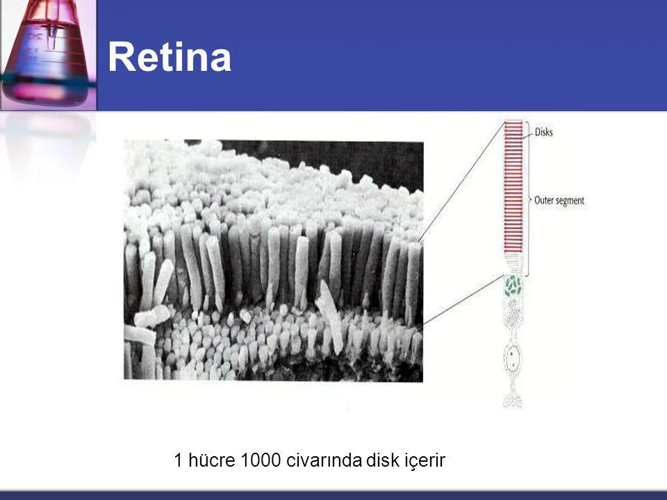 Retina 1 hücre 1000 civarında disk içerir