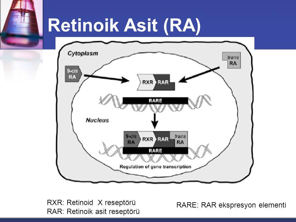 Retinoik Asit (RA) RXR: Retinoid X reseptörü