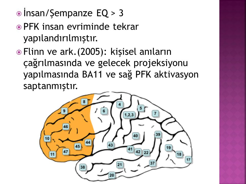 İnsan/Şempanze EQ > 3