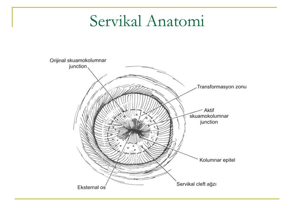 Servikal Anatomi