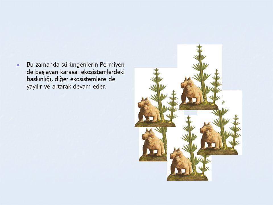 Bu zamanda sürüngenlerin Permiyen de başlayan karasal ekosistemlerdeki baskınlığı, diğer ekosistemlere de yayılır ve artarak devam eder.