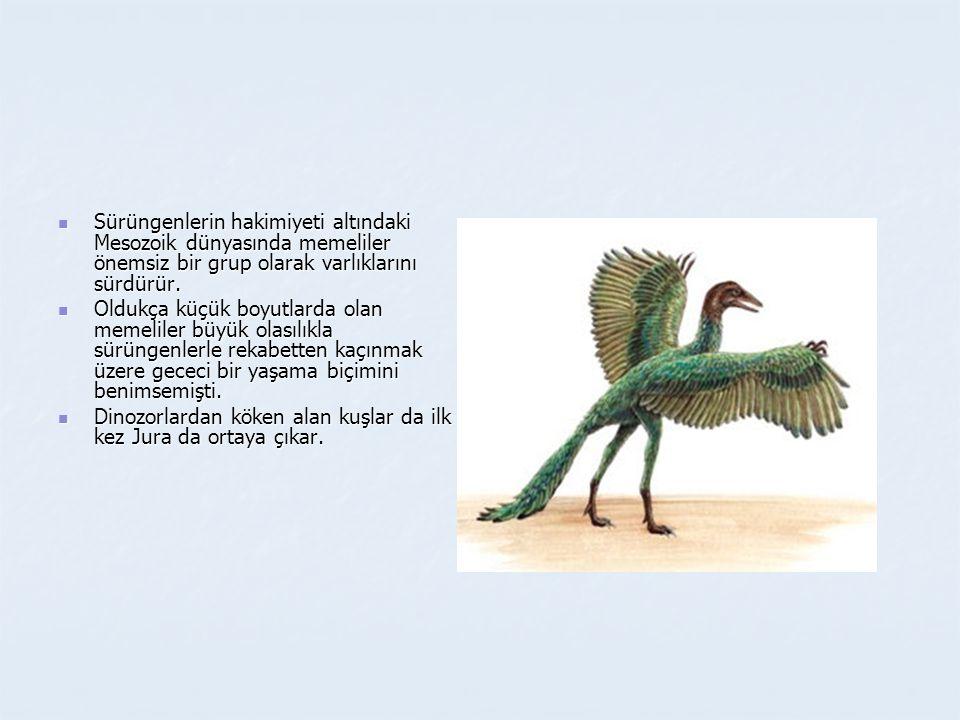 Sürüngenlerin hakimiyeti altındaki Mesozoik dünyasında memeliler önemsiz bir grup olarak varlıklarını sürdürür.