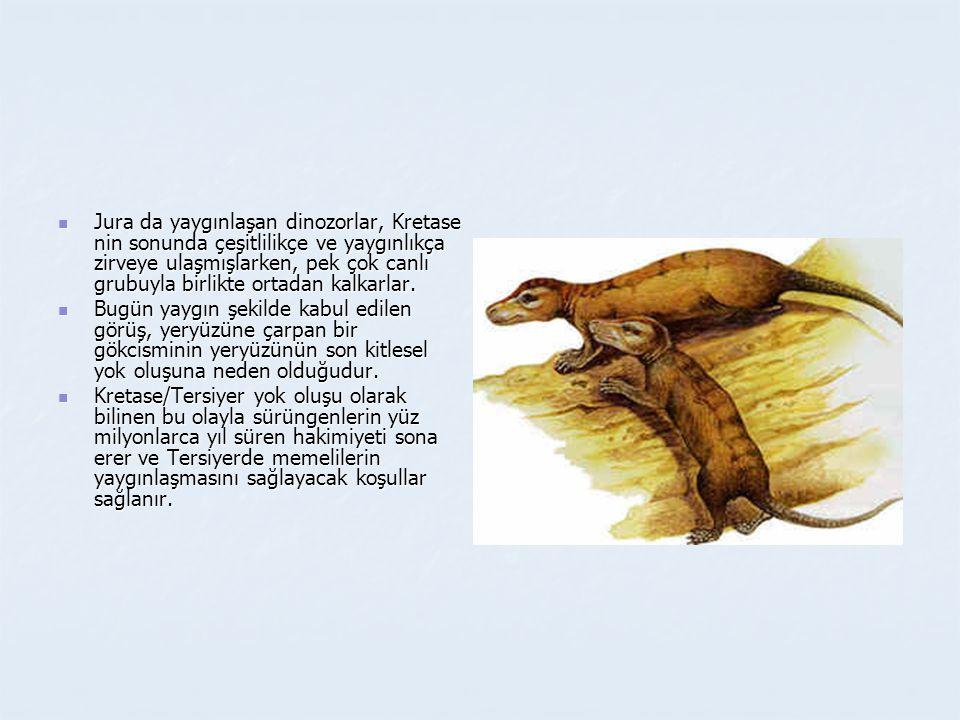 Jura da yaygınlaşan dinozorlar, Kretase nin sonunda çeşitlilikçe ve yaygınlıkça zirveye ulaşmışlarken, pek çok canlı grubuyla birlikte ortadan kalkarlar.