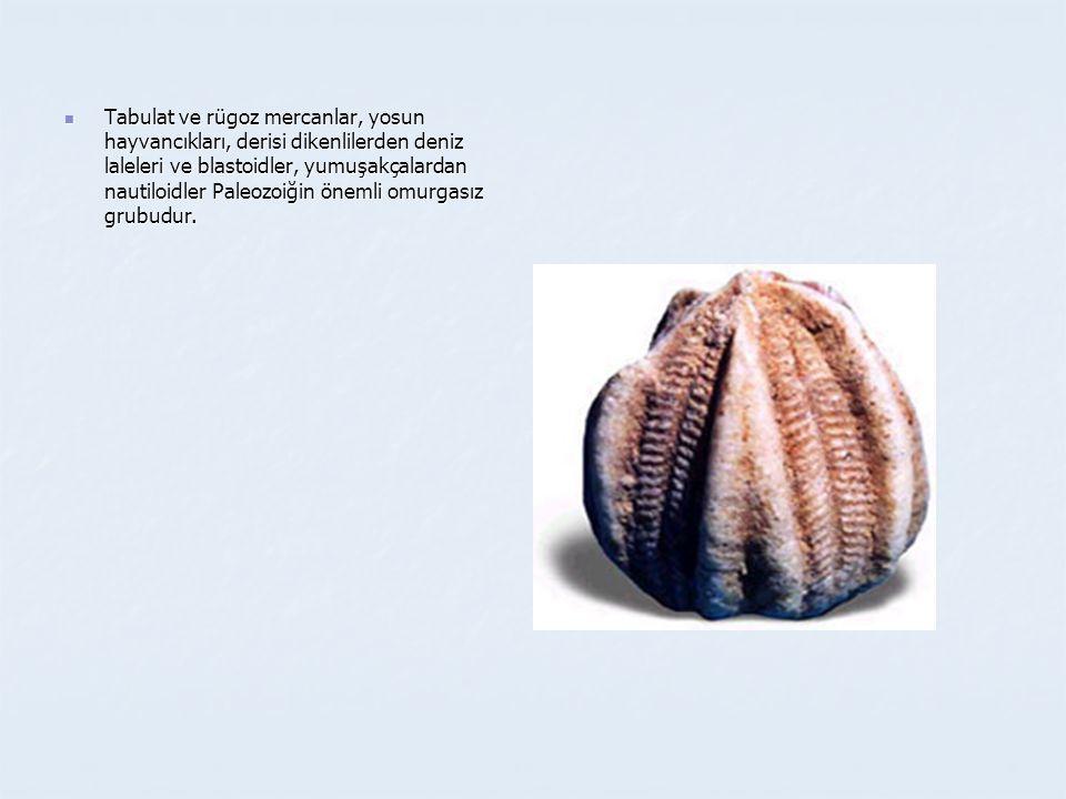 Tabulat ve rügoz mercanlar, yosun hayvancıkları, derisi dikenlilerden deniz laleleri ve blastoidler, yumuşakçalardan nautiloidler Paleozoiğin önemli omurgasız grubudur.