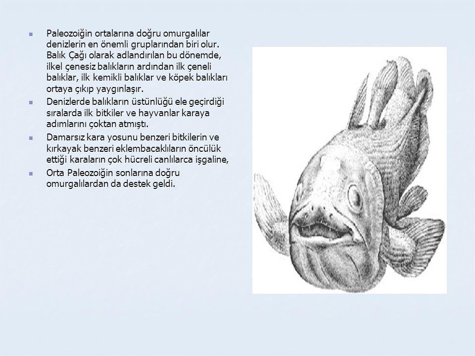 Paleozoiğin ortalarına doğru omurgalılar denizlerin en önemli gruplarından biri olur. Balık Çağı olarak adlandırılan bu dönemde, ilkel çenesiz balıkların ardından ilk çeneli balıklar, ilk kemikli balıklar ve köpek balıkları ortaya çıkıp yaygınlaşır.