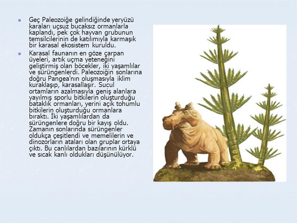 Geç Paleozoiğe gelindiğinde yeryüzü karaları uçsuz bucaksız ormanlarla kaplandı, pek çok hayvan grubunun temsilcilerinin de katılımıyla karmaşık bir karasal ekosistem kuruldu.