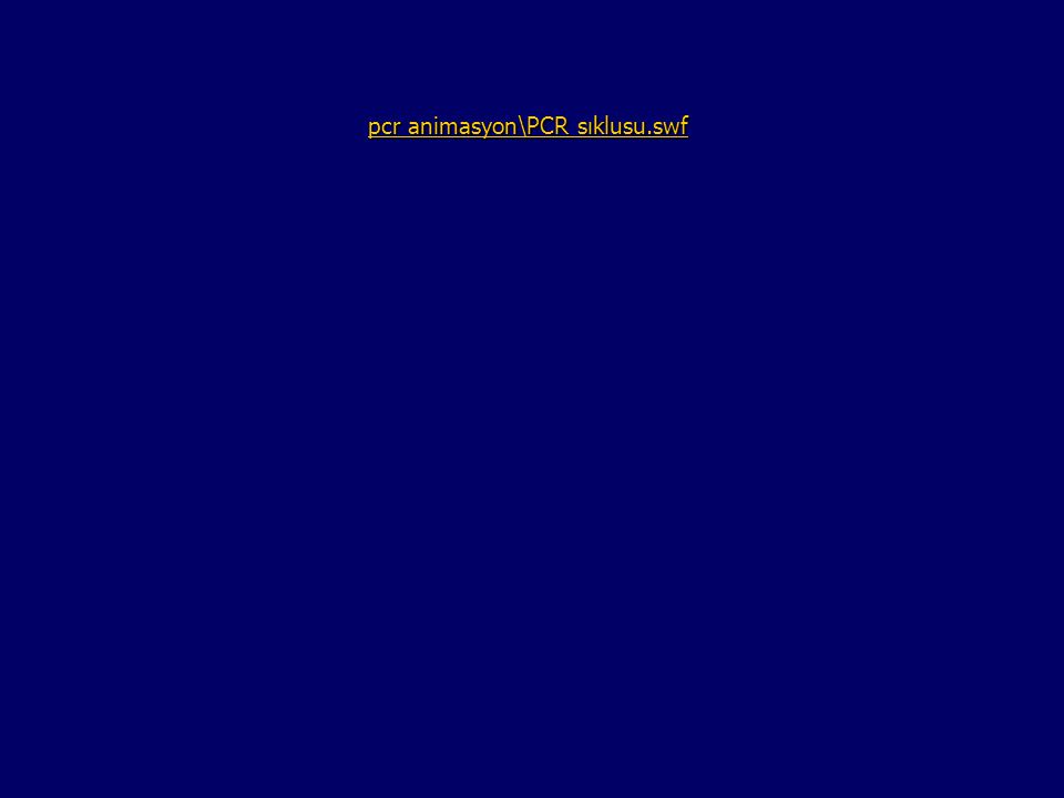 pcr animasyon\PCR sıklusu.swf