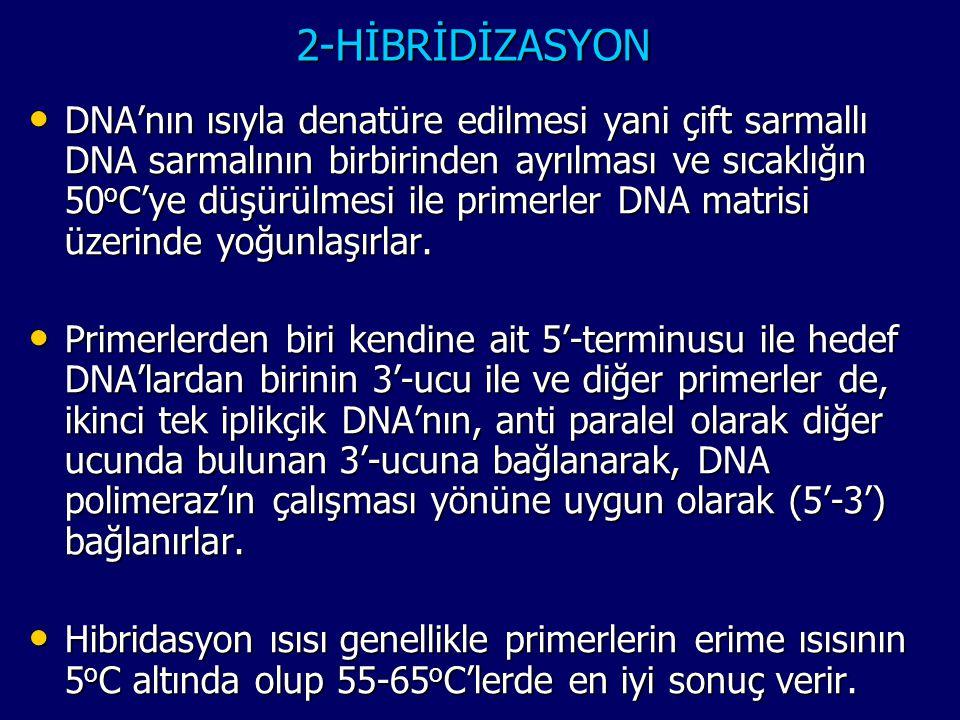 2-HİBRİDİZASYON