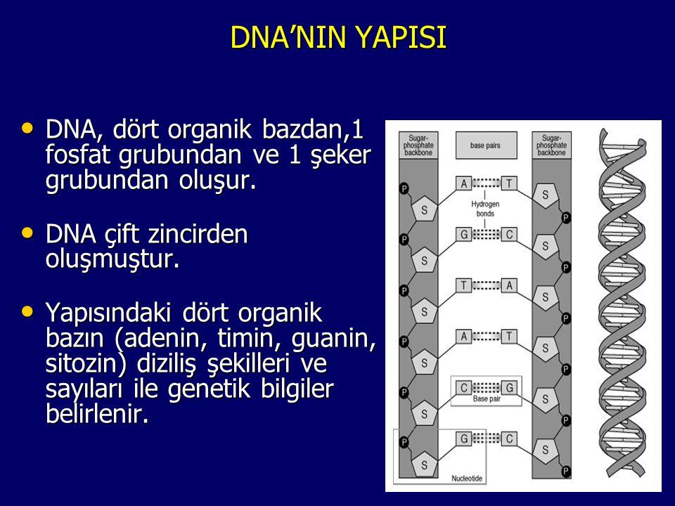 DNA'NIN YAPISI DNA, dört organik bazdan,1 fosfat grubundan ve 1 şeker grubundan oluşur. DNA çift zincirden oluşmuştur.