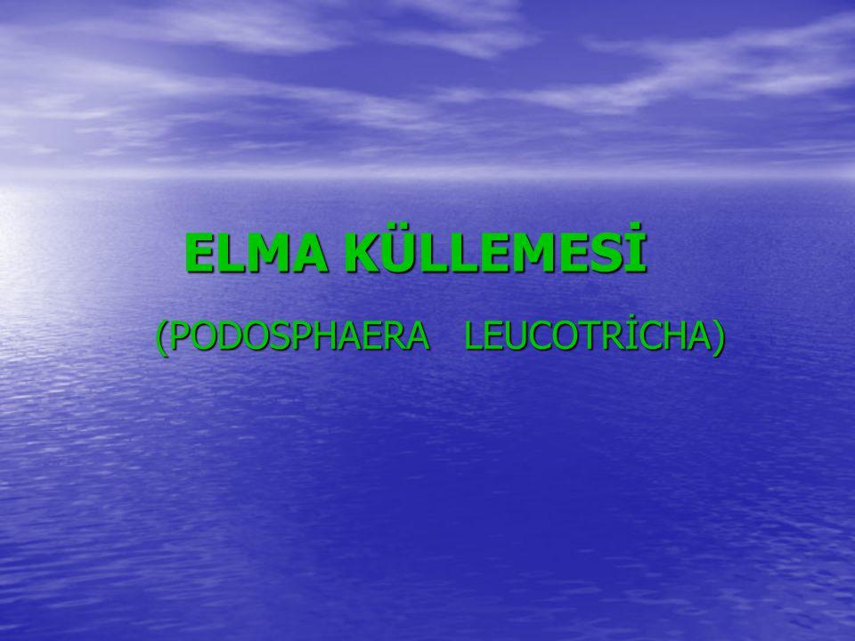 (PODOSPHAERA LEUCOTRİCHA)