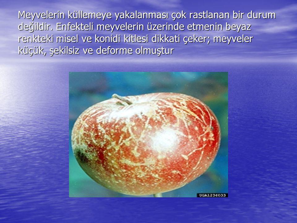 Meyvelerin küllemeye yakalanması çok rastlanan bir durum değildir