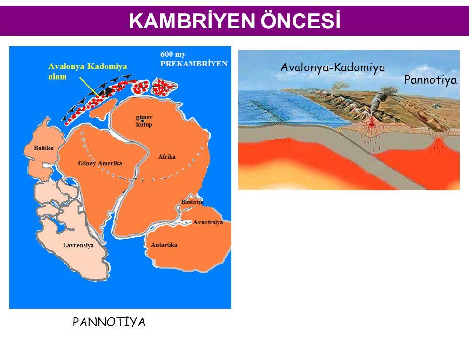 KAMBRİYEN ÖNCESİ Avalonya-Kadomiya Pannotiya PANNOTİYA