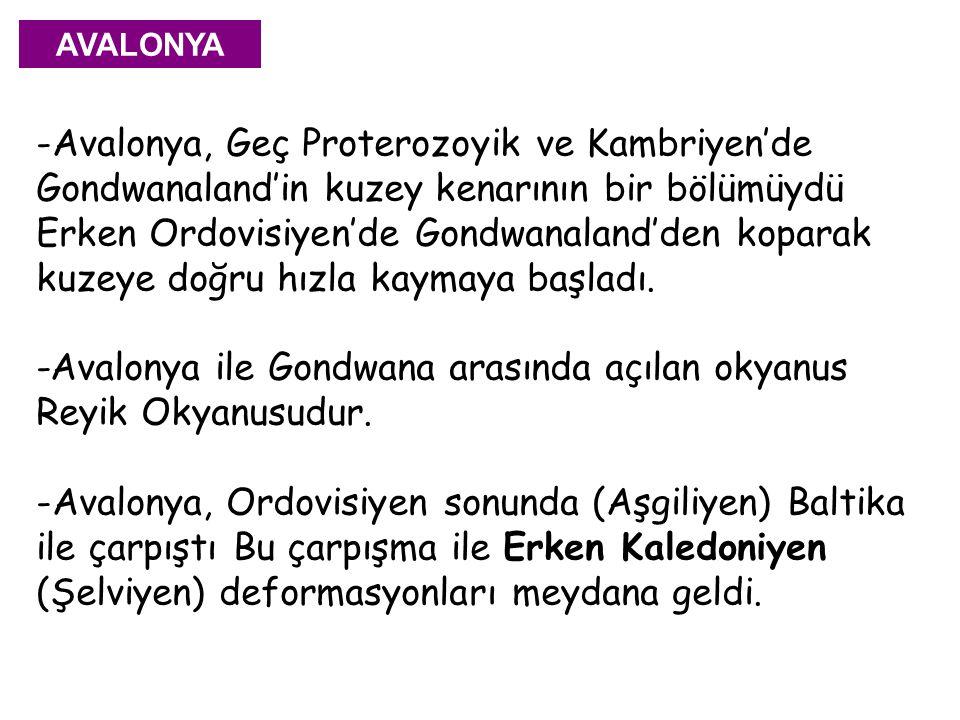 -Avalonya ile Gondwana arasında açılan okyanus Reyik Okyanusudur.