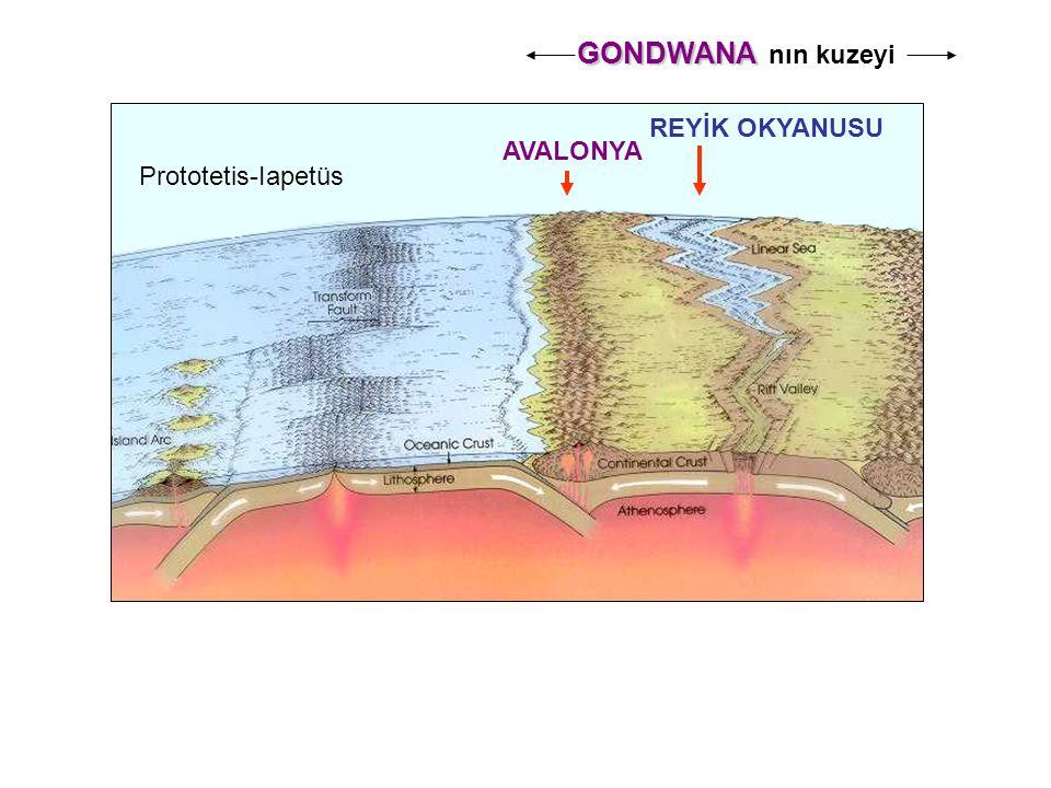 GONDWANA nın kuzeyi REYİK OKYANUSU AVALONYA Prototetis-Iapetüs