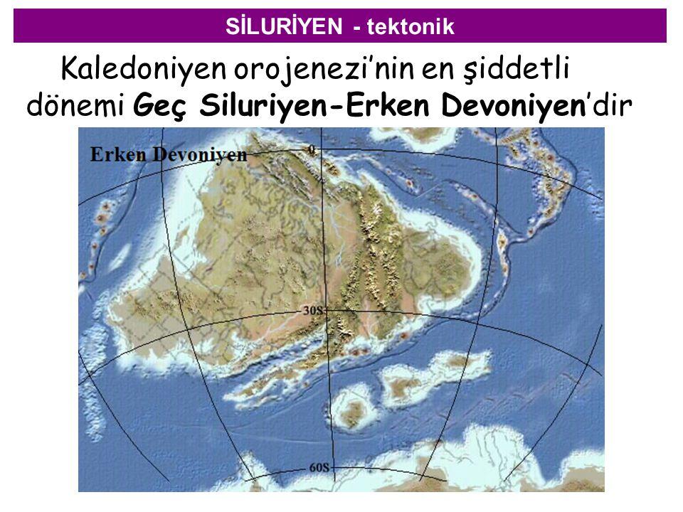 SİLURİYEN - tektonik Kaledoniyen orojenezi'nin en şiddetli dönemi Geç Siluriyen-Erken Devoniyen'dir