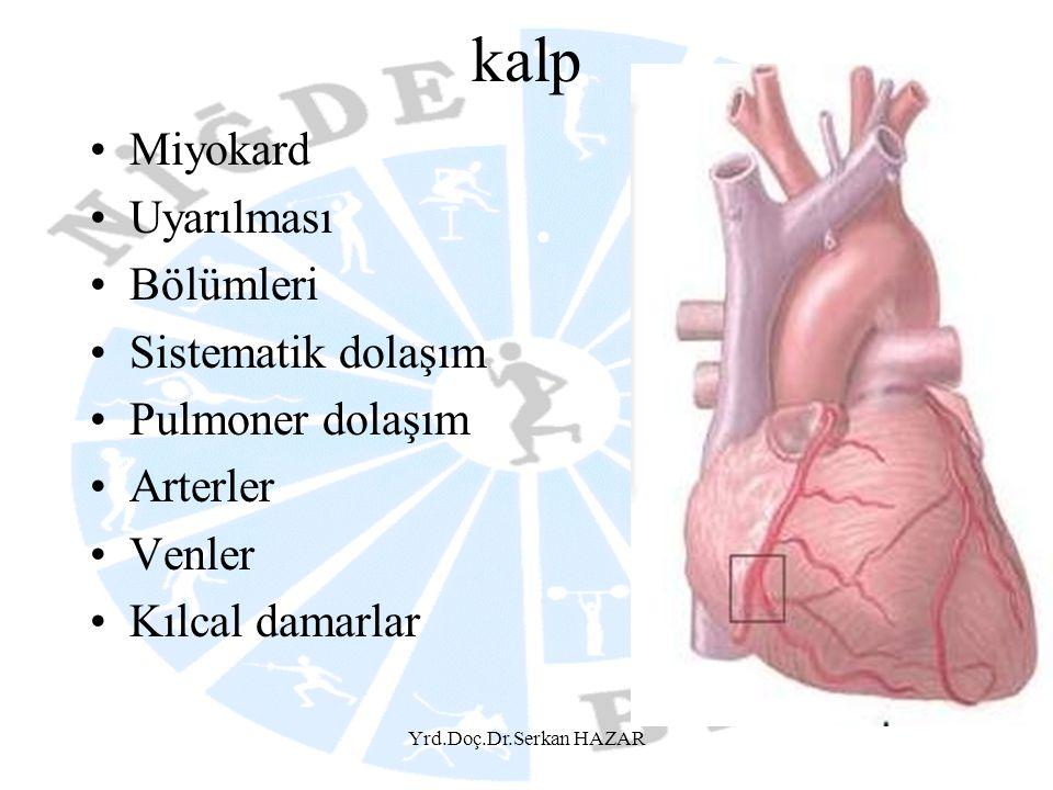 kalp Miyokard Uyarılması Bölümleri Sistematik dolaşım Pulmoner dolaşım