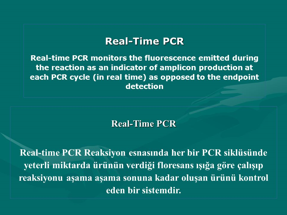 Real-Time PCR Real-Time PCR